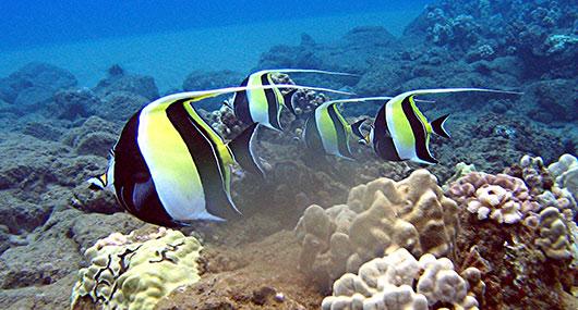 Molokini scuba diving
